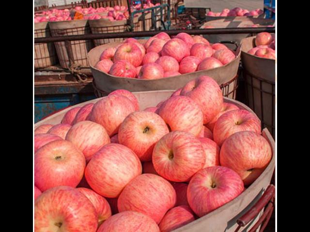 吴江区国内水果批发哪里便宜 和谐共赢 苏州市开拓果蔬贸易供应