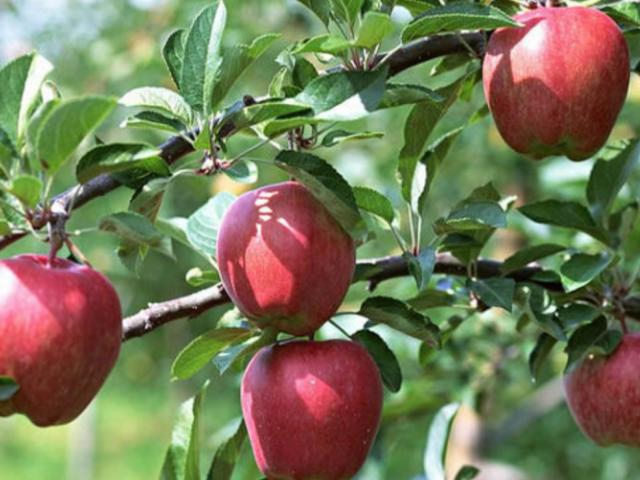 虎丘区国产水果 创造辉煌 苏州市开拓果蔬贸易供应