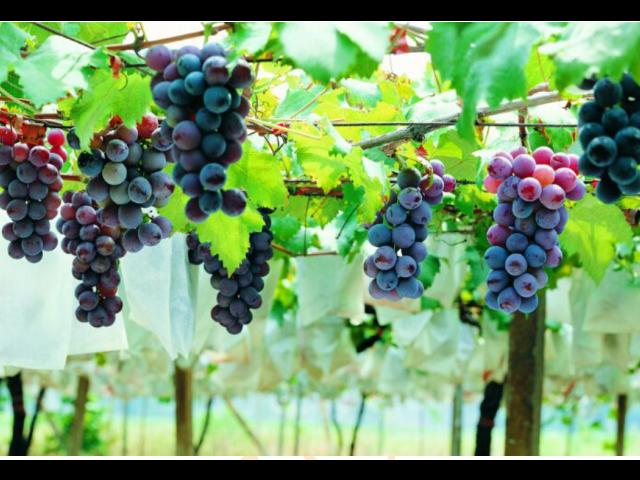 吴中区水果产品供应公司 诚信互利 苏州市开拓果蔬贸易供应