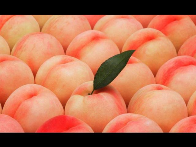 吴中果蔬国际供货商 有口皆碑 苏州市开拓果蔬贸易供应