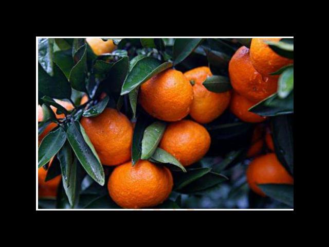 虎丘区蔬果供应公司 服务至上 苏州市开拓果蔬贸易供应