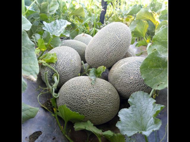 姑苏区蔬果销售价格 服务为先「苏州市开拓果蔬贸易供应」
