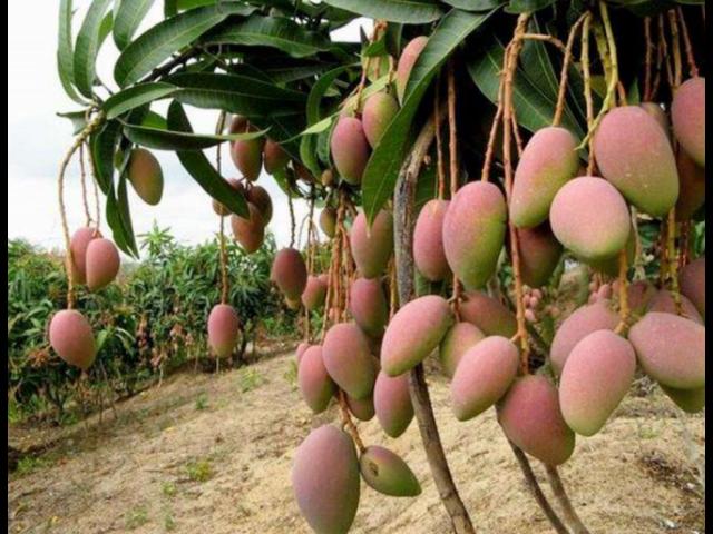 苏州果蔬国际供应报价 有口皆碑 苏州市开拓果蔬贸易供应