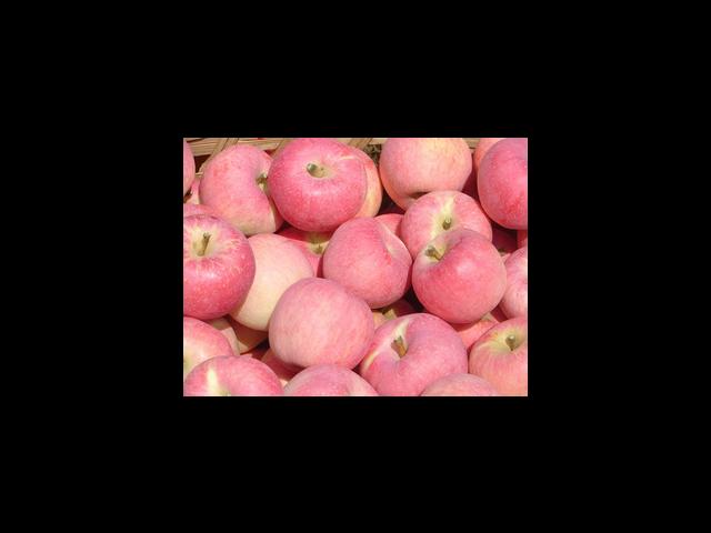 虎丘蘋果分銷哪家好 客戶至上 蘇州市開拓果蔬貿易供應
