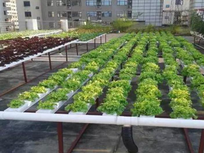 深圳數字智慧農業服務平臺 服務為先 深圳昕昀生態科技供應