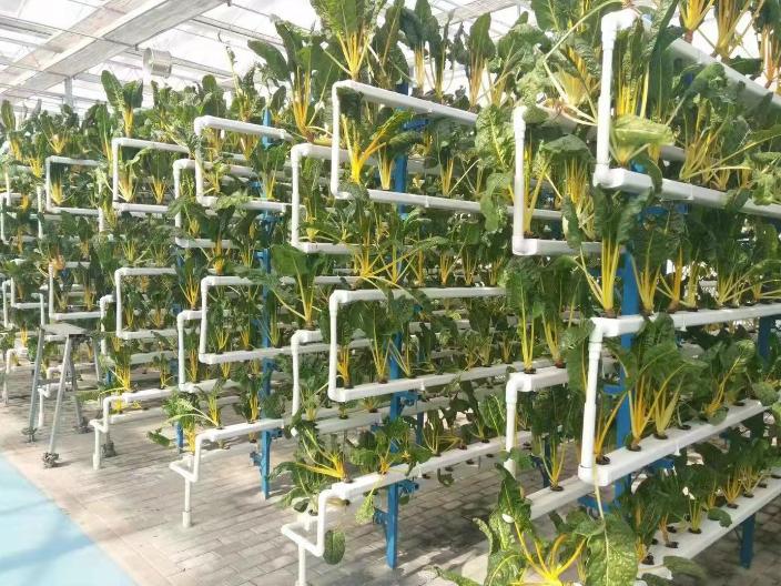廣州室內無土栽培公司靠譜嗎 來電咨詢 深圳昕昀生態科技供應