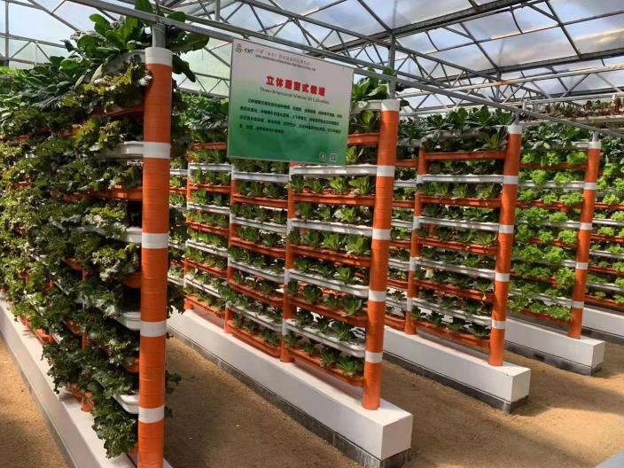 惠州簡易無土栽培哪里好 歡迎咨詢「深圳昕昀生態科技供應」