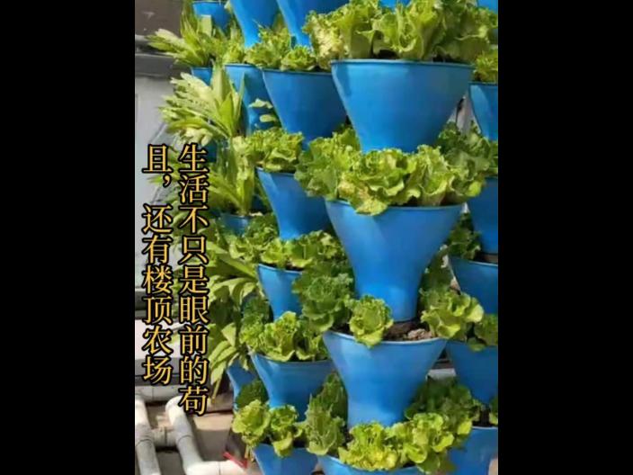 光明区农村无土栽培工厂