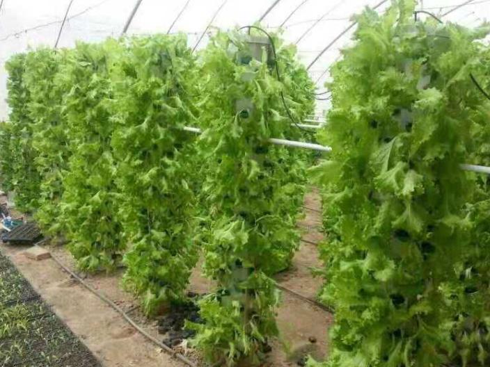 龙华区简易无土栽培多少钱,无土栽培