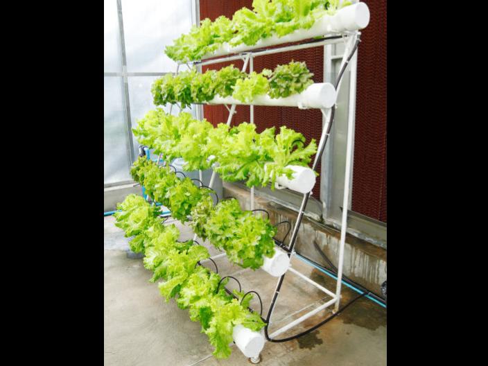 汕头阳台种菜需要什么土