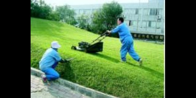 白云区厂区植物养护服务公司 服务至上「广州市圆和清洁服务供应」