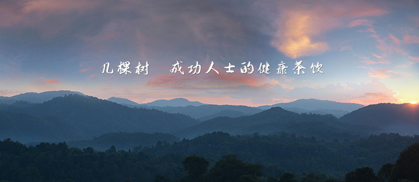 龙园茶业茶化石【勐海龙园茶厂供应】