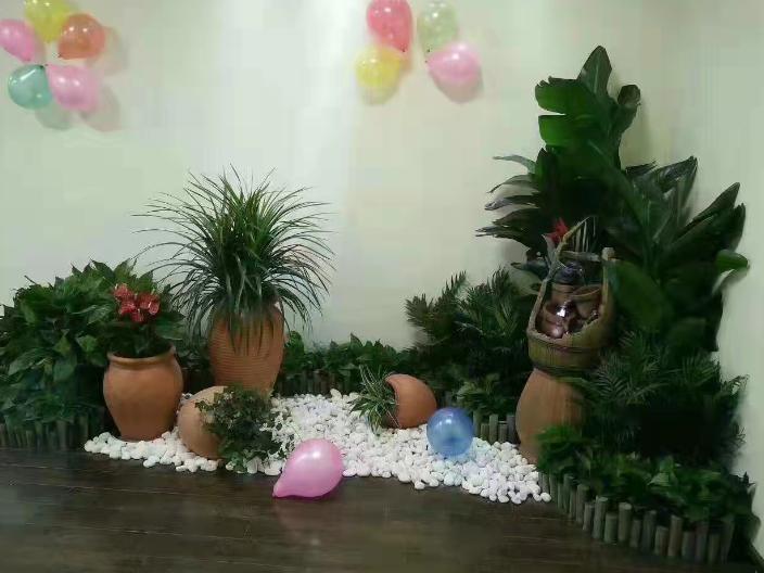 室內花卉種植服務方案價錢 誠信為本 浙江暗香園林供應