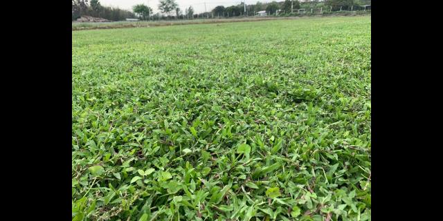 江西庭院草坪养护