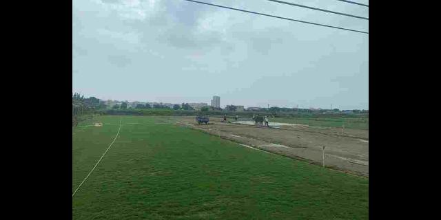 黑龙江台湾草草坪种植基地