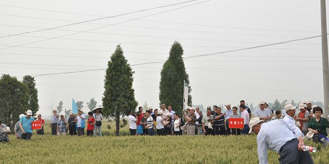 臨沂強筋小麥品種供應「淄博博信農業科技供應」