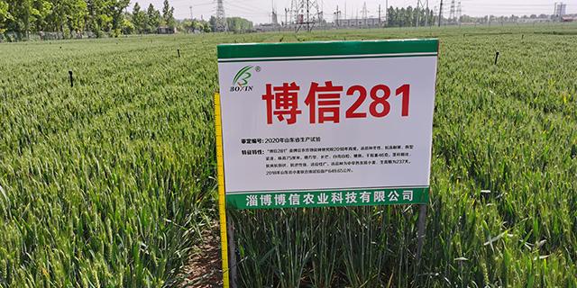 東營抗旱小麥品種推薦「淄博博信農業科技供應」