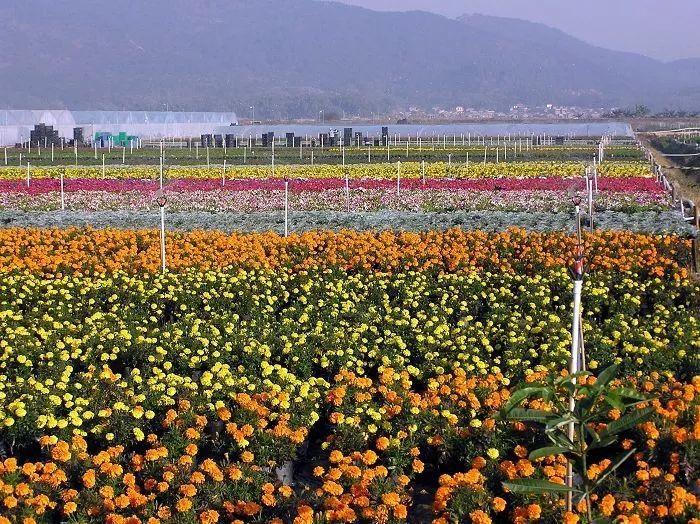石景山区梯田花卉种植合成