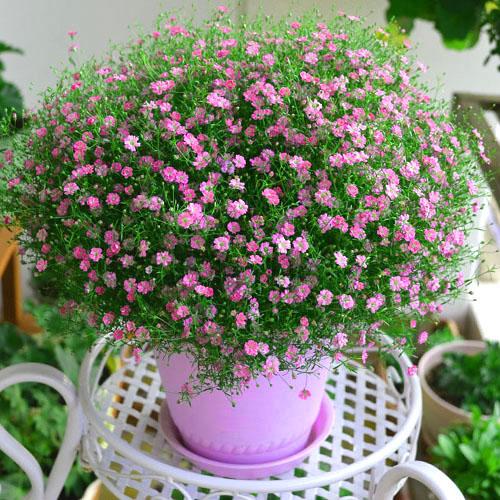 房山区生长期短花卉种植产品介绍