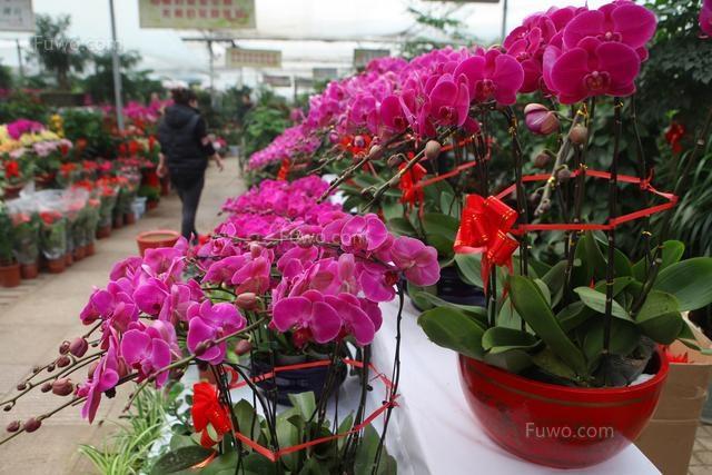 和平区盆栽花卉种植值多少钱