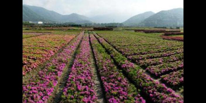通州区节气花卉种植销售公司