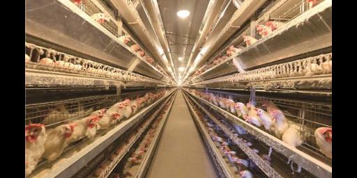 博兴生猪养殖 滨州市曦麟养殖供应