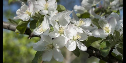 沾化区好养活的观赏花卉联系方式 滨州中楚园林绿化管理供应