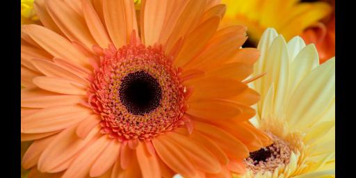 沾化区好养活的耐寒花卉价目 滨州中楚园林绿化管理供应