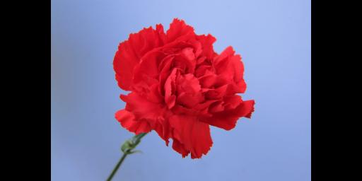 阳信观赏花卉联系方式 滨州中楚园林绿化管理供应