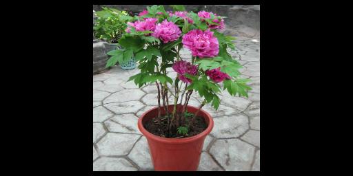 滨城区好养活的观赏花卉新报价 滨州中楚园林绿化管理供应