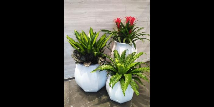 新都区植物栽培与养护