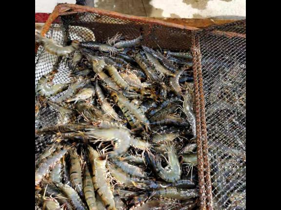 辽宁农村水产养殖项目 宜兴市超众渔业机械供应