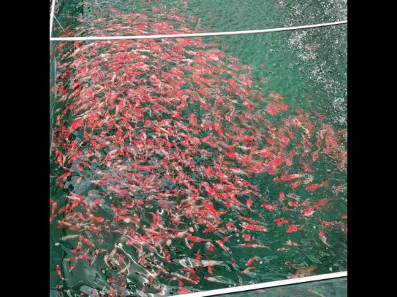 贵州健康水产养殖项目 宜兴市超众渔业机械供应