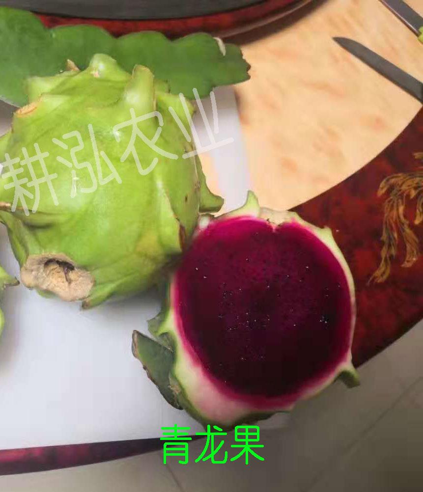 苏州青龙果幼苗,青龙果