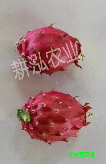 厦门黄皮火龙果种植 欢迎来电 厦门耕泓农业科技供应