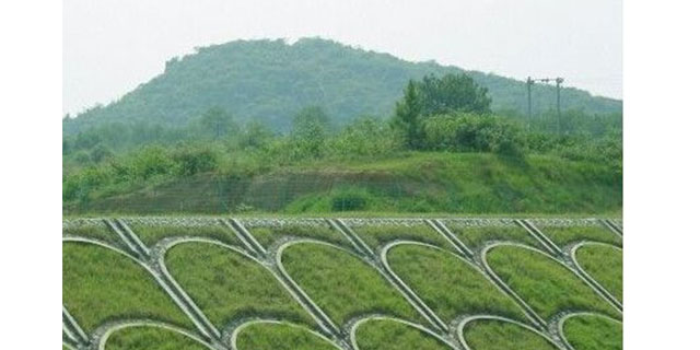 都匀玉龙草皮多少钱一平 有口皆碑「金田苗木种植园供应」