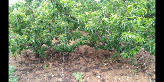 潍坊种植及批发价位