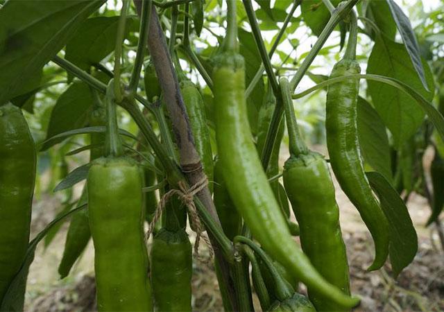 崇左齊全的生鮮配送中心 歡迎咨詢 廣西丹洲農業發展供應