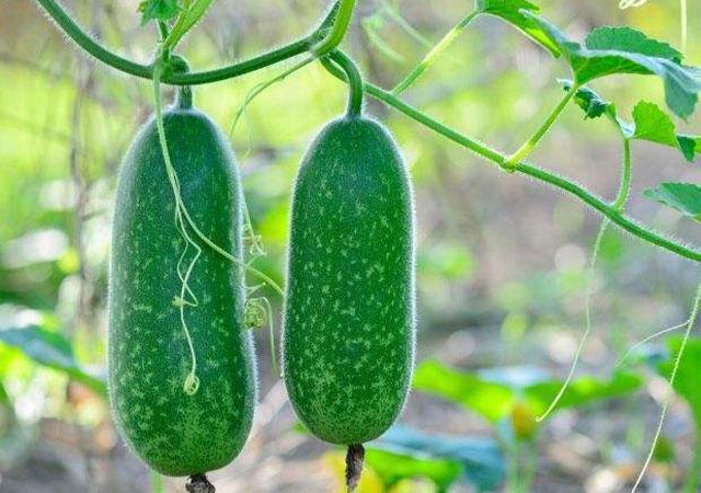 单位食堂生鲜配送联系方式 欢迎咨询 广西丹洲农业发展供应