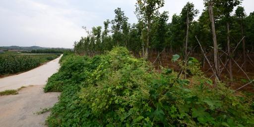 威海威海旅游诚信为先 诚信为本「荣成市海韵兴苗木种植供应」