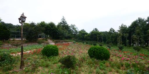 福山區百搭生態園排名靠前 誠信為本「榮成市海韻興苗木種植供應」