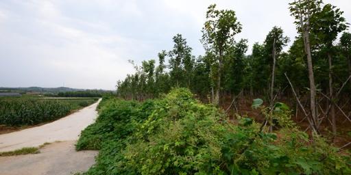 河北较好农家乐质量保证 来电咨询「荣成市海韵兴苗木种植供应」