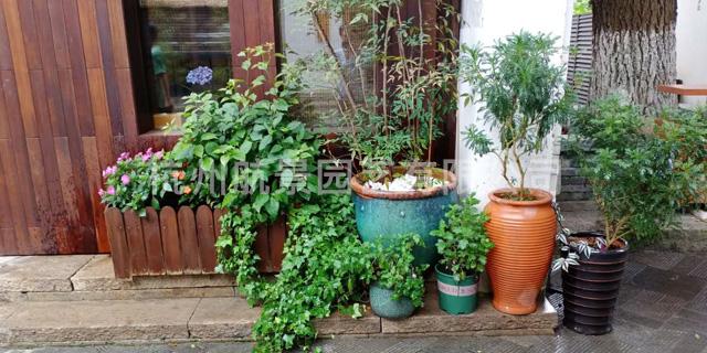 江干区开业典礼植物租赁 真诚推荐「杭州航景园艺供应」