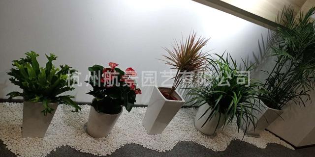 上城区花卉 创造辉煌「杭州航景园艺供应」