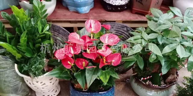 会场植物租赁送货上门 真诚推荐「杭州航景园艺供应」