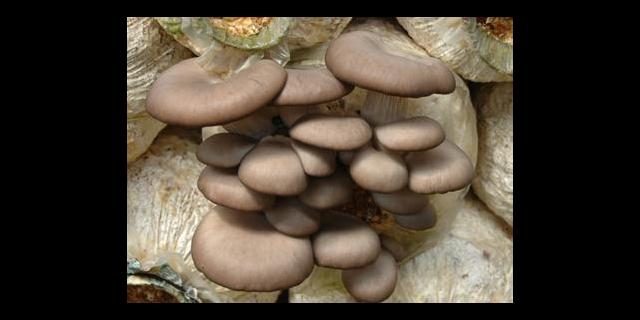 十堰大自然食用菌哪些种类 湖北安辉农牧供应