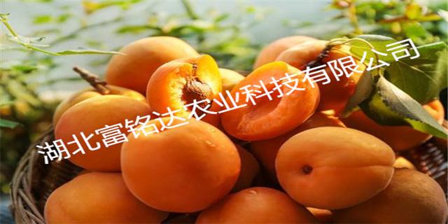 新疆脆甜黄桃招商 欢迎咨询「湖北富铭达农业科技供应」