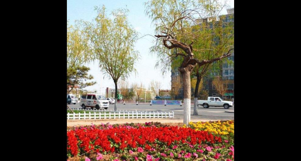 北京智能园林绿化工程诚信推荐