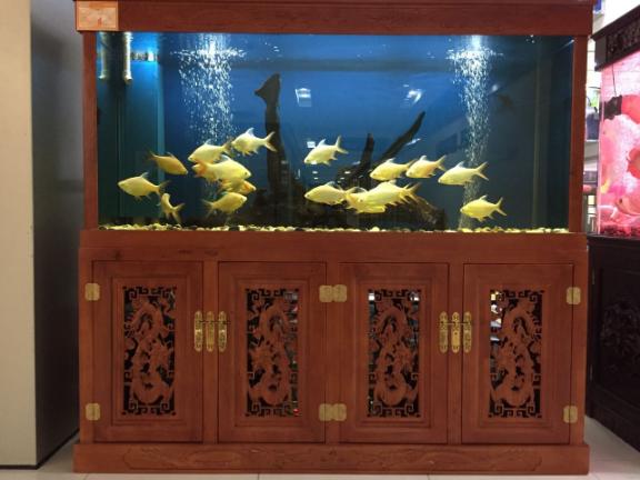普洱魚缸私人定制「云南鯨悅水族恒盈魚缸供應」