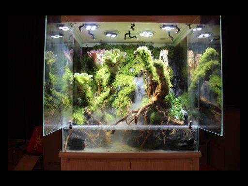 云南辦公室雨林缸大概需要多少錢